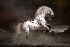 Leopard Appaloosa - Shiloh by Shanina Conway