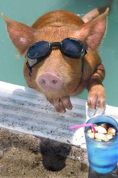 #Animals that are totally ready for the #summer http://www.kafepauza.mk/zanimlivosti/zhivotni-koi-se-totalno-podgotveni-za-doagjanjeto-na-letoto/