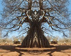 Dillon Marsh - Upon Reflection: Balboas tree photography