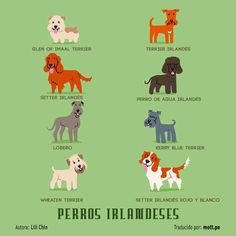 Perros Irlandeses.