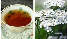 Ceai de coada-soricelului - utilizari interne si externe | La Taifas Natural Remedies, Tea Cups, Healthy, Tableware, Dinnerware, Dishes, Natural Treatments, Natural Medicine, Place Settings