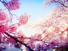 #sakura #hanami #ueno #tokyo #cherryblossom #flowers #spring #sakura2015 #japantrip #japan #櫻  #櫻花 #滿開 #花見 #桜 #さくら #桜が滿開 #花 #東京 #日本 #上野