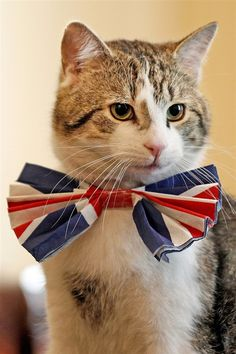 Larry, British Prime Minister David Cameron's cat, and Chief Mouser at #10 Downing Street, dresses up for the Royal wedding of Prince William to Catherine Middleton.