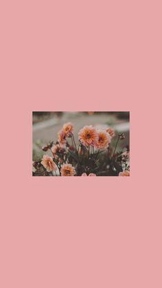 Wallpaper Flower Pink - Wallpaper Flower Pink - in 2020 Wallpaper Flower, Mood Wallpaper, Iphone Background Wallpaper, Aesthetic Pastel Wallpaper, Tumblr Wallpaper, Colorful Wallpaper, Lock Screen Wallpaper, Aesthetic Wallpapers, Pink Aesthetic