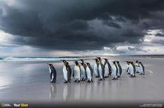 Awesome penguin photo