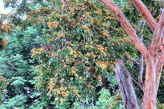 Flores de mato e troncos de árvores