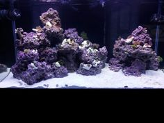 Some things (besides water) finally in tank