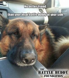 Battle Buddy................ The benefit that a well trained service dog can have in the lives of disabled veterans is life-changing and life-saving. With an average of 22 veteran suicides a day, there has never been a greater need for the provision of long term and tangible support for our veterans in need. The Battle Buddy Foundation is currently participating in a Crowdrise fundraising campaign to help fund the training and placement of more battle buddy service dogs, like the amazi...