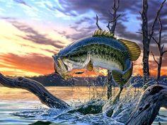 bass fishing - tomorrows adventures