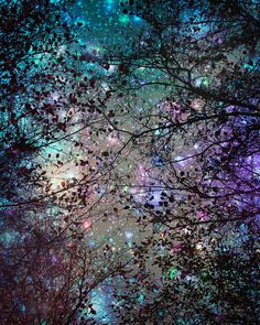 Photography Night sky Trees Stars Fine art print by Fizzstudio Night Sky Wallpaper, Galaxy Wallpaper, Nature Wallpaper, Night Photography, Art Photography, Ringa Linga, Nightlights, Pretty Wallpapers, Nature Paintings