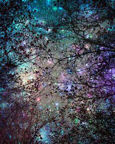 Fotografia, cielo notturno, alberi, stelle, in stampe d