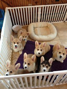 omg. i want them all! More
