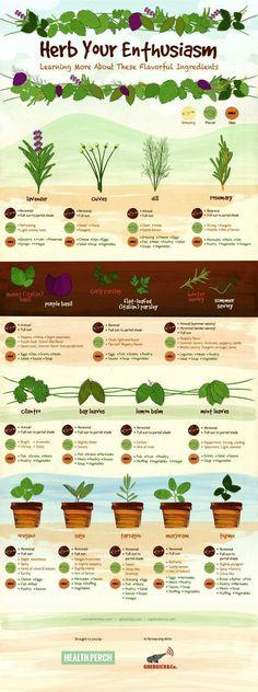 Herb Your Enthusiasm #infographic #Herbs #gardening #hydroponicsinfographic #herbsgarden