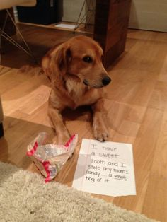 Dog Shaming - Sweet tooth gets busted