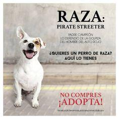 Los Streeter, la nueva raza de perros callejeros - Mascotadictos