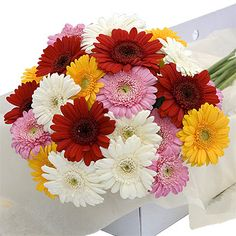 Gerbera Mixed Flower Box Online for Delivery Valentines Flowers, Christmas Flowers, Christmas Fun, Valentine Day Gifts, Best Valentine's Day Gifts, Flowers For You, Gerbera, Flower Boxes, Flower Delivery