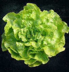 Lattuga: perché fa bene mangiarla e come preparare un delizioso frullato - Ambiente Bio