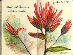Watercolor pencils and watercolor in small Moleskine