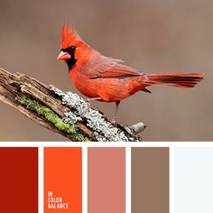 Цветовая палитра №1503