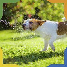 #PetsTip Una buena idea para refrescar a tu mascota en días calurosos es salir al parque y dejarlo meterse a las fuentes y que juegue en el agua o bañarlo con agua fresca. Te lo agradecerá.