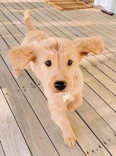 Dog And Puppies Small .Dog And Puppies Small Super Cute Puppies, Cute Baby Dogs, Cute Dogs And Puppies, I Love Dogs, Doggies, Cute Little Animals, Cute Funny Animals, Cute Animal Photos, Dog Mom
