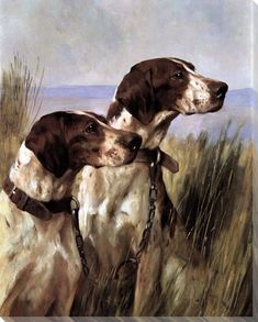 Two Pointer Dogs Wrapped Canvas Giclee Print Wall Art Pointer Puppies, Pointer Dog, Dog Wrap, Gravure, Sculpture, Little Dogs, Pet Birds, Wrapped Canvas, Wall Art Prints