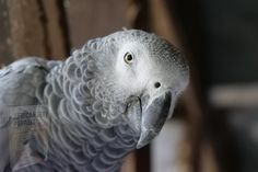 Parrot Wallpaper, New Wallpaper Hd, Photo Wallpaper, Wallpaper Backgrounds, Wallpapers, Parrot Toys, Parrot Bird, Parrot Image, Talking Parrots