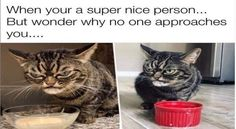 And if you like cats more than people, you will definitely relate to most of them.#cats 3dogs #funnymemes 3animalmemes #introvertmemes #funnyanimals #funnycats #funnydogs