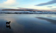 Inspiration gathering #Scotland #Caithness, Dunnet Bay www.havenhouseart.com