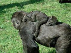 Per oggi, quindi, niente invidia per questi animali addormentati in certi casi abbracciati l'uno all'altro. Giraffe, leoni e anche criceti che stringono un piccolo peloche simile a loro (aww, che tenerezza quella foto…)
