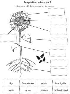 Diagramme de tournesol - printable