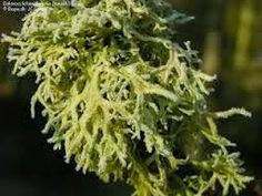 Crone Cronicles: herbs and uses