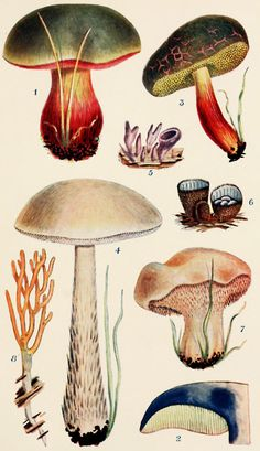 'British fungi with a chapter on lichens' by George Massee. Published 1911