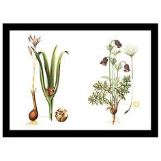 CARA SAVEN | A2 Botanical 1 Canvas - Homeware - 5rooms.com Lush Green, Color Of The Year, Pantone Color, Emerald Green, Design Inspiration, Wall Art, Canvas, Artist, Nature