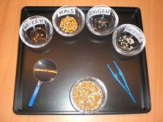 Die Kinder sortieren mit der Pinzette Getreidekörner aus. Sie lernen spielerisch den Unterschied kennen und das sortieren macht ihn...