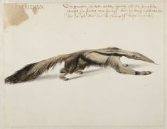 Frans Post. Animals in Brazil Symposium - Symposiums - What's on - Rijksmuseum