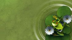 Green frog on a lily pad Eat The Frog, Frog And Toad, Frog Pictures, Animal Activist, Frog Art, Green Frog, Green Wallpaper, Reptiles And Amphibians, Cartoon Art