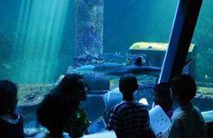 Aquarium de la Réunion - L'aquarium de la Réunion vous offre à la fois de l'émotion, du rêve, du spectacle et de nombreuses informations.
