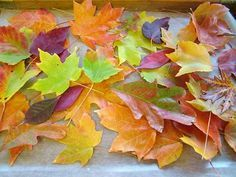 Autumn leaves dipped in paraffin wax: beautiful!