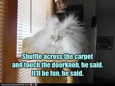 shuffle across the carpet and touch the doorknob, he said it'll be fun he said.