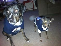 Twitter fan @TeaghanMaroni's #HockeyPets are ready for #HockeyDay in Canada!