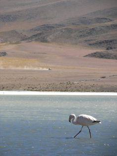 Sud lipez Bolivie