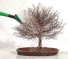 trees roots Bonsai Tree Repotting and Root Pruning: Information about Repotting Bonsai Trees. Bonsai Tree Repotting and Root Pruning: Information about Repotting Bonsai Trees Bonsai Tree Care, Bonsai Art, Bonsai Plants, Bonsai Garden, Bonsai Trees, Bonsai Pruning, Tree Pruning, Indoor Bonsai, Indoor Plants