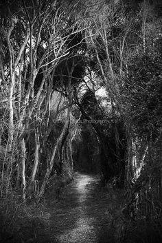 Pauatahanui Reserve | © Elyse Childs Photography
