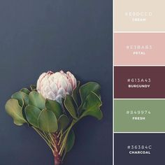 "Build Your Brand: 20 Unique and Memorable Color Palettes to Inspire You – ""Fall Collection"" This palette has a traditional or antique tone to it. This is a great combination to represent a product that is a little more refined or mature."