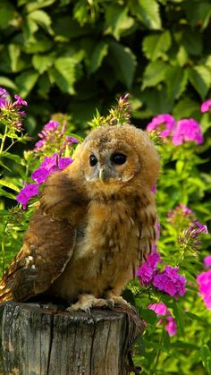 It's so beautiful that I question if it's real. I miss the owl that use to visit our backyard. I believe it ate the moles (they're insect eaters) and voles (plant root eaters) that popped from the ground at night.