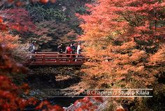 Fantastic colors of Japan #automn #red #leaves #kyoto #japan