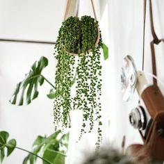 Vores stilfulde hængekrukke fra Design with Light er med til at skabe det fineste liv hos bloggeren @looopimpyourroom. #godsøndag #DWL #grøntergodt #urbanjunglebloggers #mariaberntsen  #Repost @lookpimpyouroom ・・・ Morgen herrscht wieder Dschungel Fieber 🤒 im Blog. Hier schon mal eine kleine Preview 🌱#urbanjunglebloggers #plantsandglass #styling #plants #vintage #boho #interior #greeninterior #interiordesign #instainterior #cactus #succulent #shopping #holmegaard