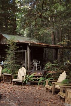 Cabin in deep forest.