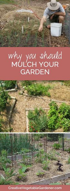 mulch is the ultimate garden tool Weeds getting you down? Don't leave bare soil in your garden and weeding will only take a few minutes a week.Weeds getting you down? Don't leave bare soil in your garden and weeding will only take a few minutes a week. Mulch For Vegetable Garden, Garden Mulch, Garden Weeds, Planting Vegetables, Growing Vegetables, Garden Tools, Gardening For Beginners, Gardening Tips, Soil Improvement